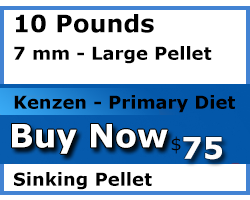 kenzen buy 10 pounds 7mm sinking koi food